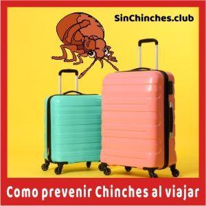 como prevenir las chinches al viajar