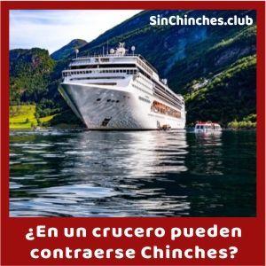 hay chinches en los cruceros