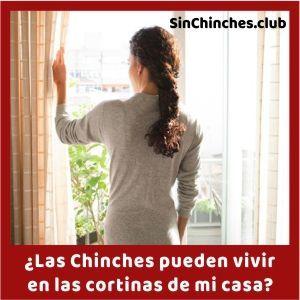las chinches pueden vivir en cortinas de una casa