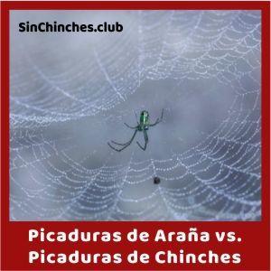 picadura de araña vs picadura de chinches