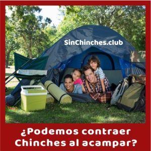 se puede contraer chinches mientras acampas