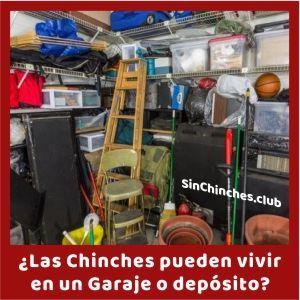 chinches pueden vivir en garaje o deposito