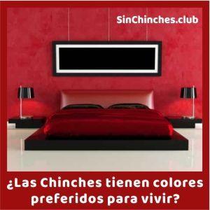 cuales son los colores favoritos de las chinches