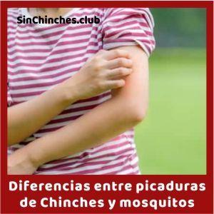 diferencia picaduras de chinches y mosquito