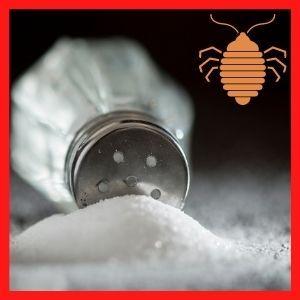 como eliminar chinches con sal