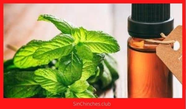 spray con aceite de menta para chinches de cama