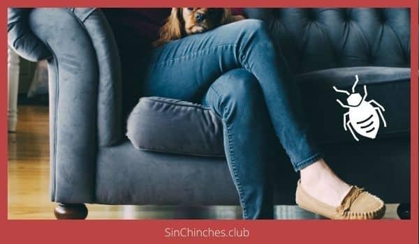 chinches en el sofa
